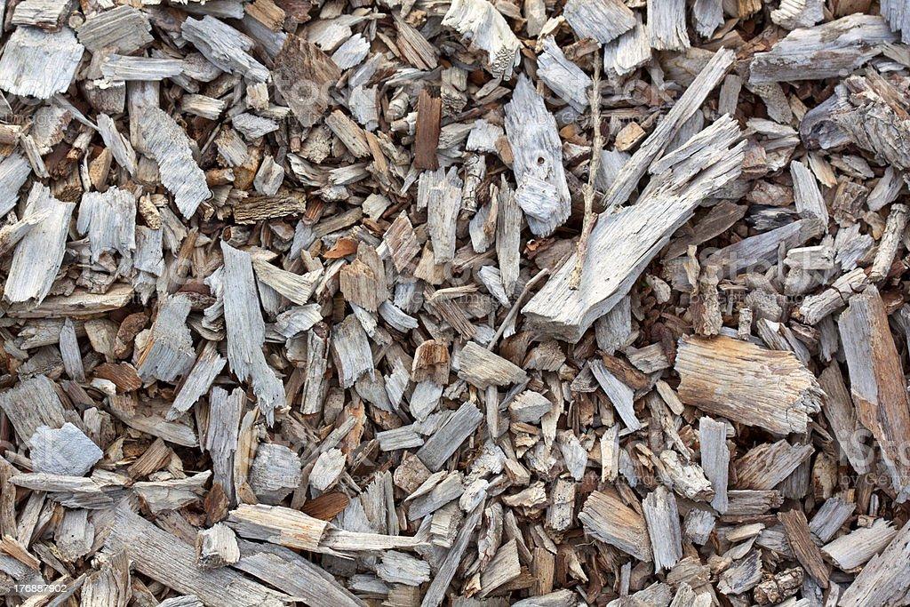 Floresta de Chão foto de stock royalty-free