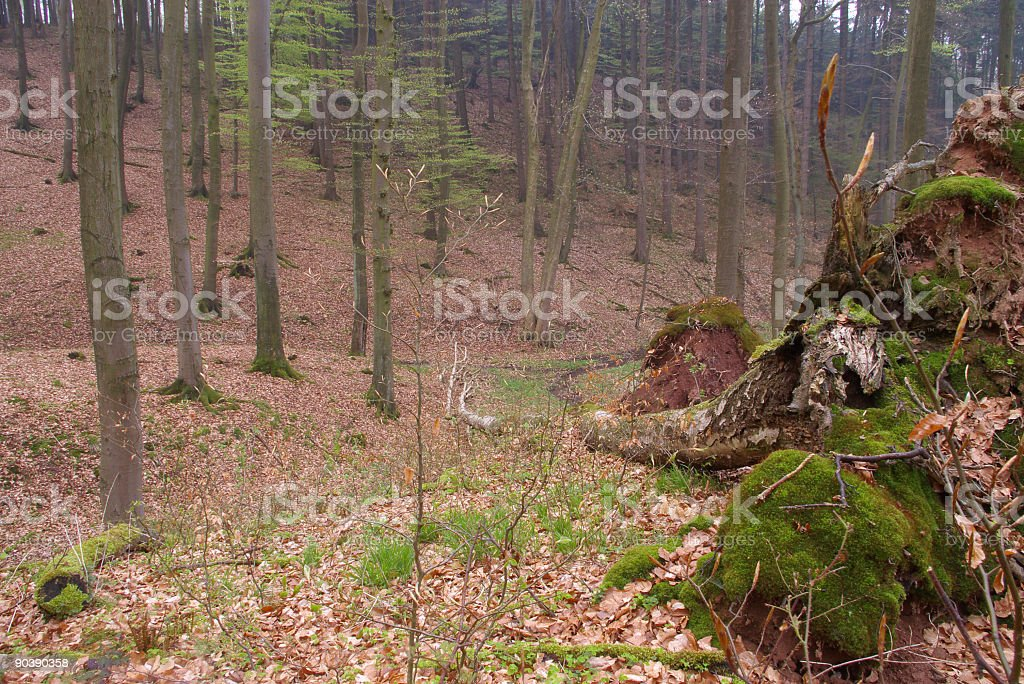 Forest floor royalty-free stock photo