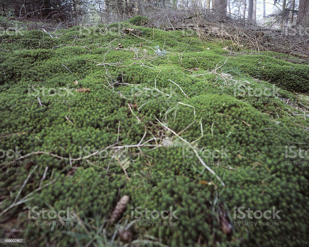 Forest floor with fresh green moss stock photo