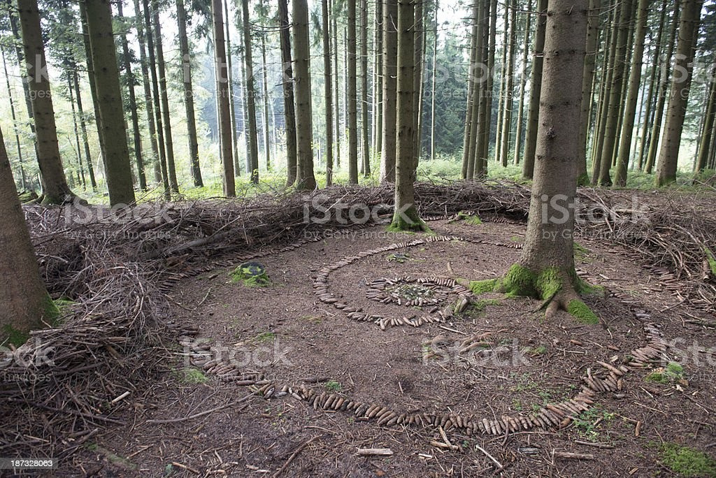 forest floor with pine cones royalty-free stock photo