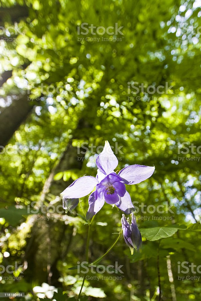 forest flower royalty-free stock photo