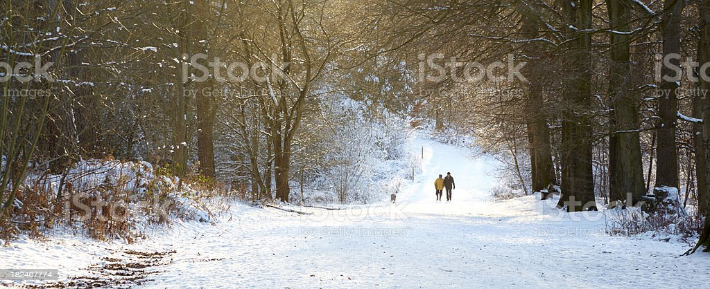 forest footpath in winter with snow royalty-free stock photo