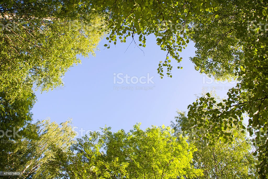 forest frame royalty-free stock photo