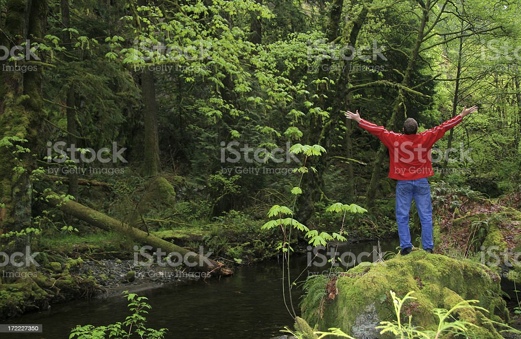 Forest Freedom royalty-free stock photo