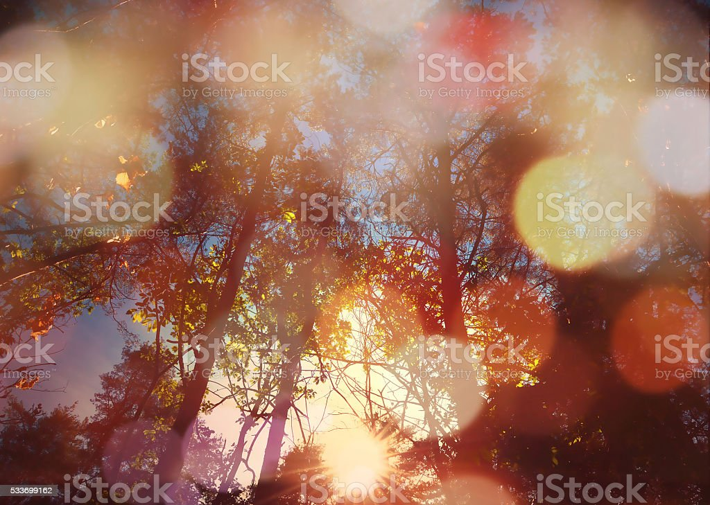 forest from below with sunlight stock photo