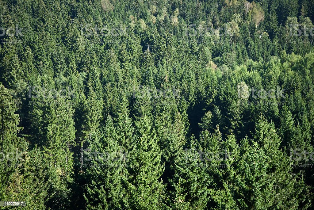Forest From Bird Eyes View royalty-free stock photo