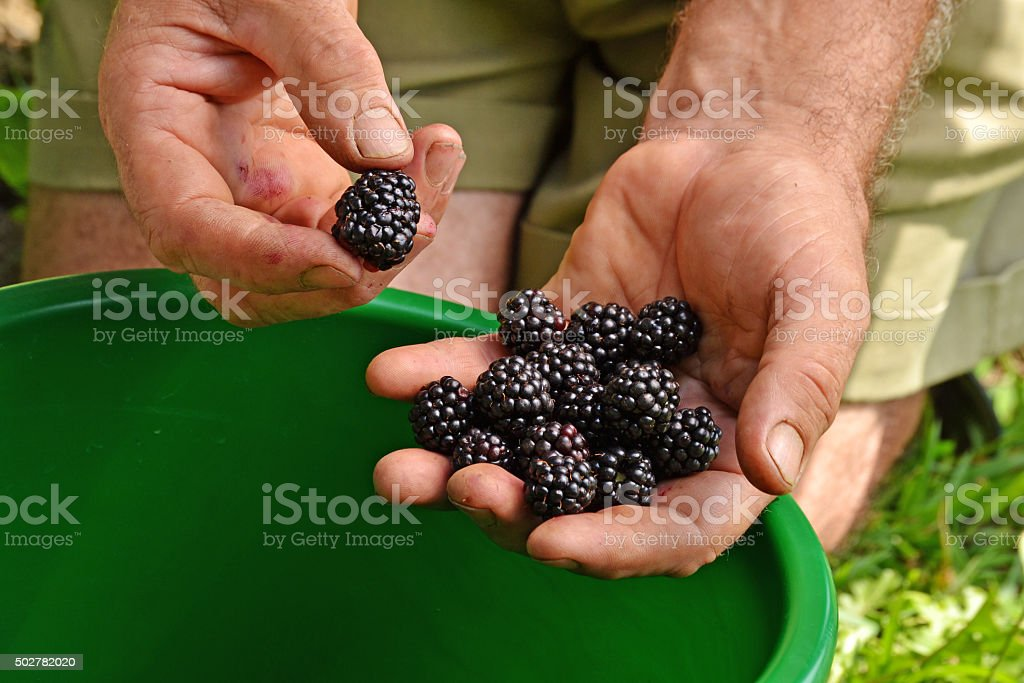 Forest fruit crop. stock photo
