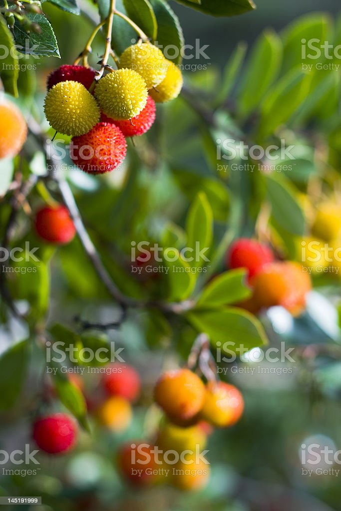 Forest fruit royalty-free stock photo