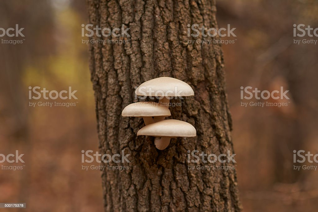 Forest fungus stock photo