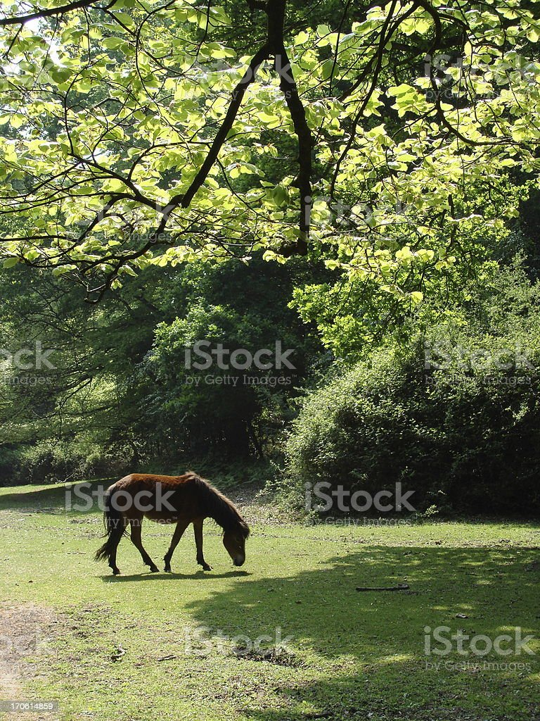 Forest glade royalty-free stock photo