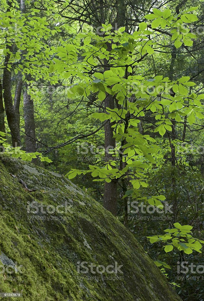 Forest Glow royalty-free stock photo