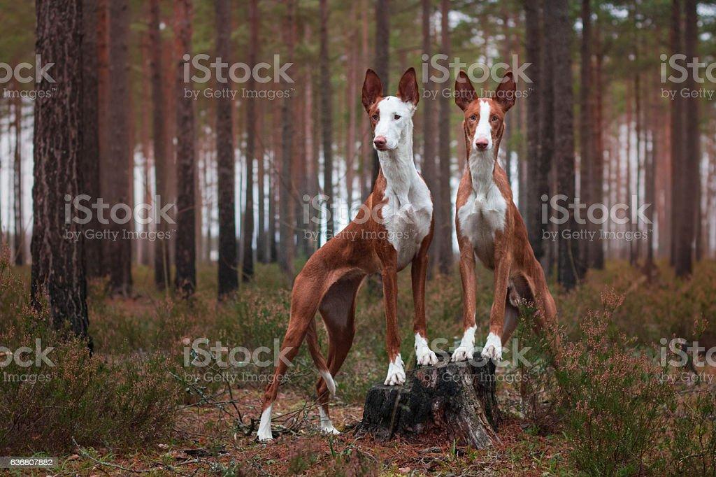 Forest gods stock photo