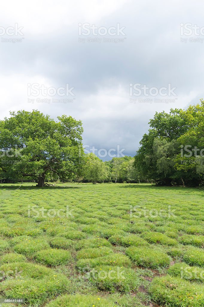 Forest Grass Mounds stock photo