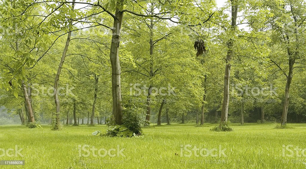 Forest green royalty-free stock photo