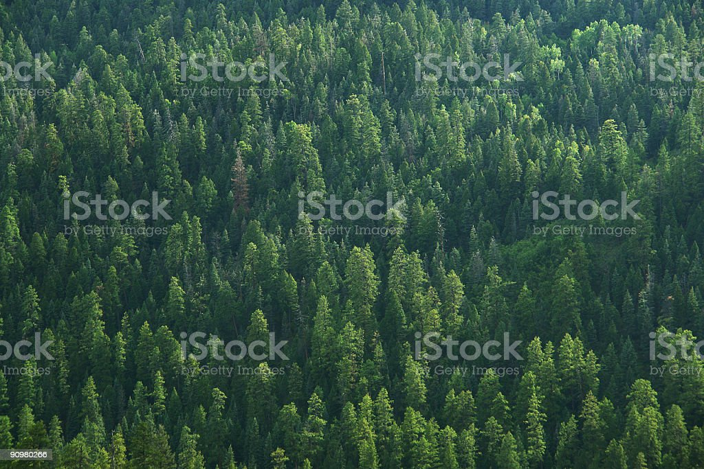 forest green stock photo