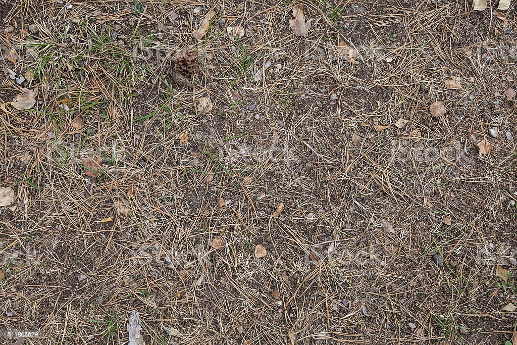 Forest Ground texture stock photo