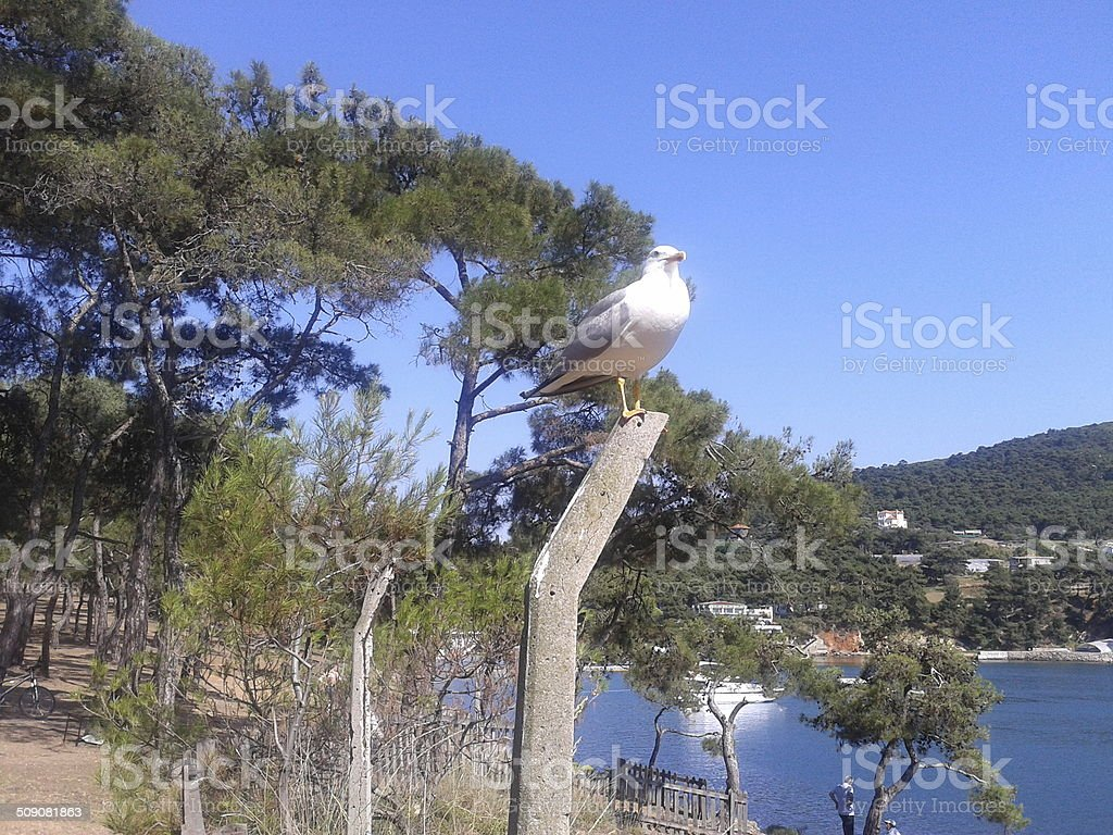 forest gull stock photo