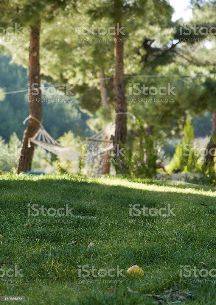Forest Hammock royalty-free stock photo