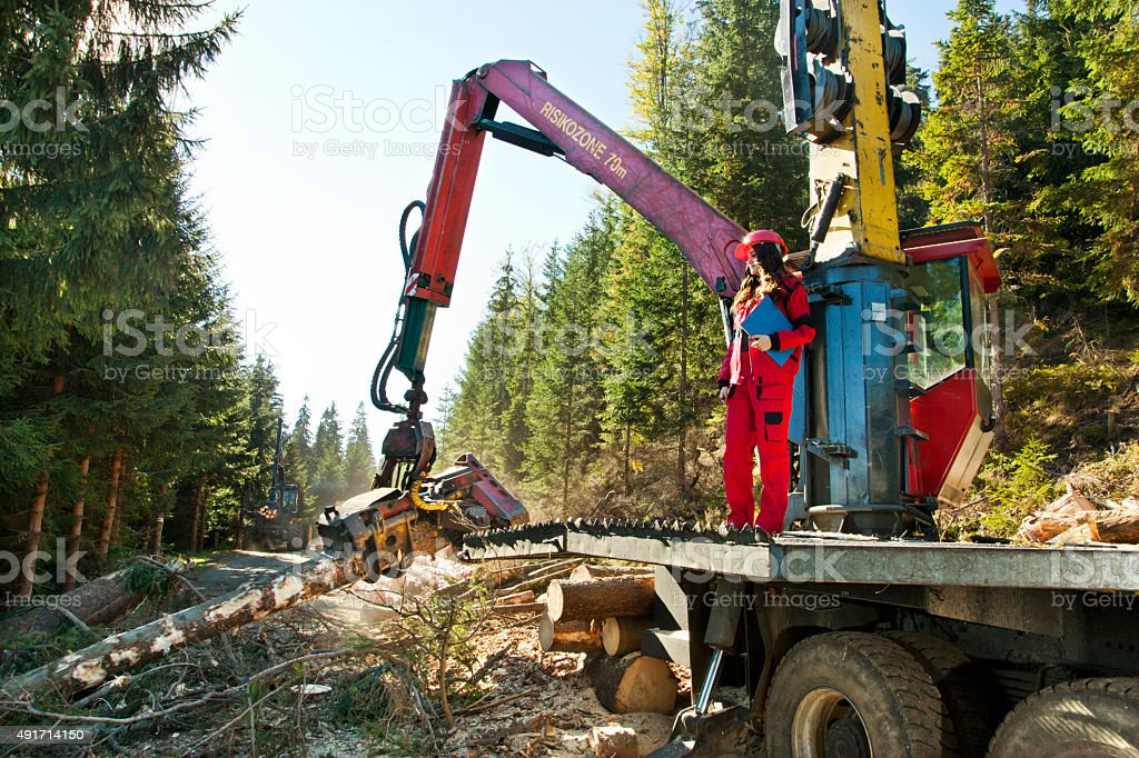 Forest harvester removes branches from a tree trunk stock photo