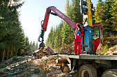 Forest harvester removes branches from a tree trunk