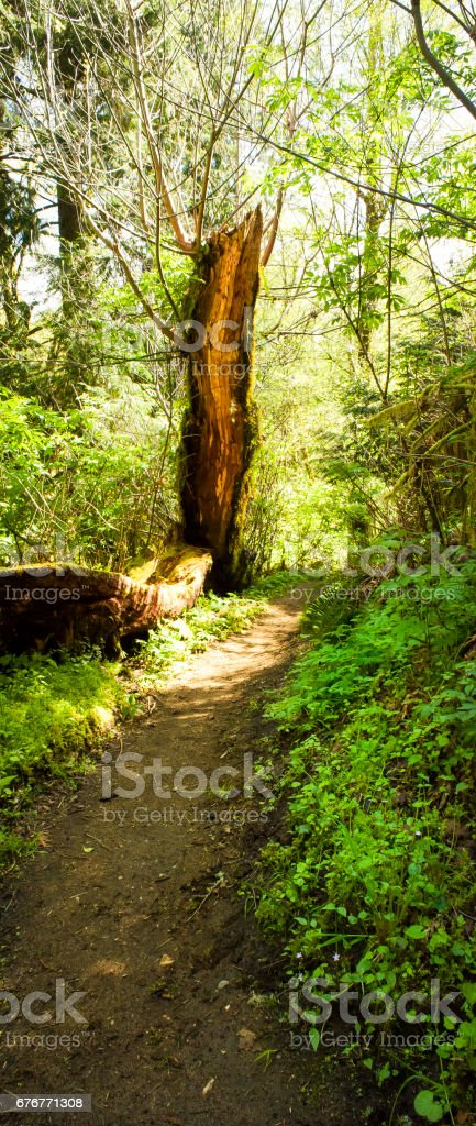 Forest Hiking Path stock photo