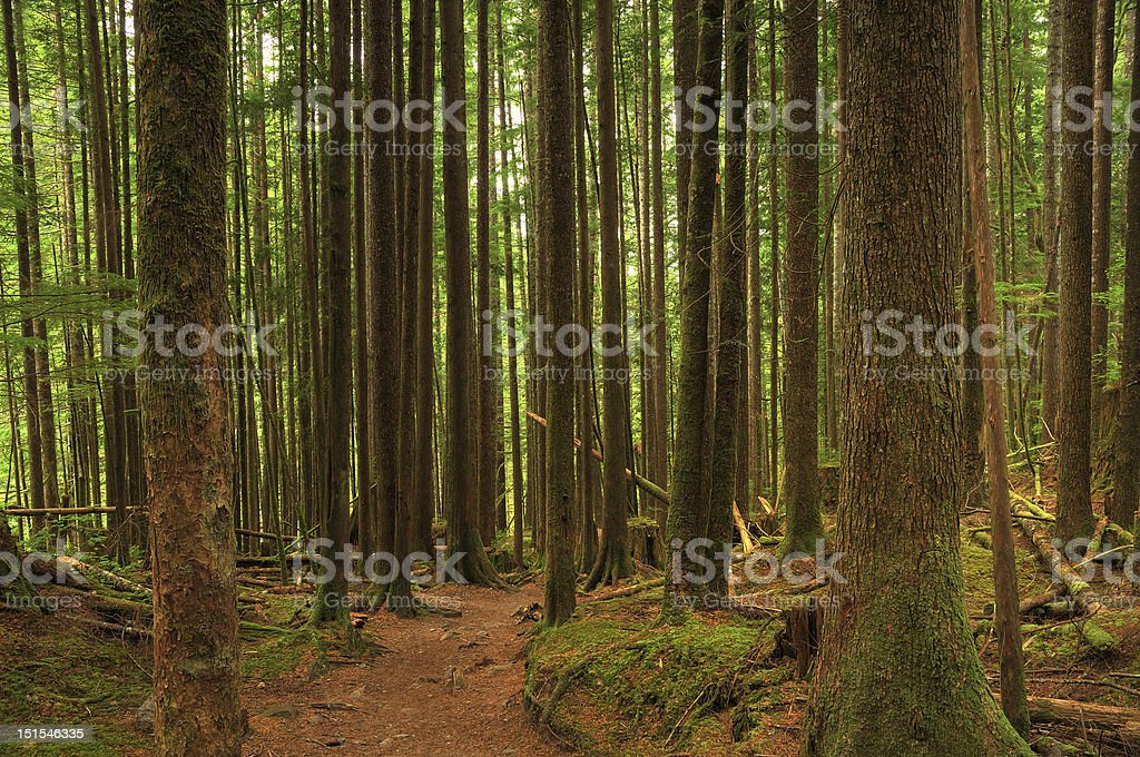 forest hiking trail royalty-free stock photo