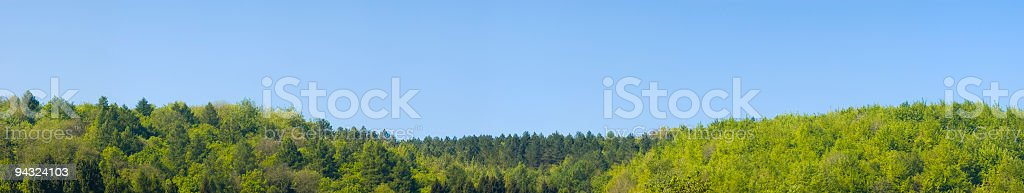 Forest horizon, clear blue skies stock photo