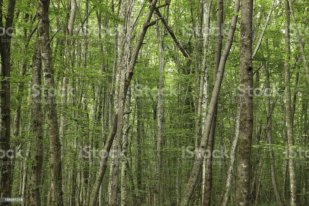 Forest, Igneada, Kirklareli, Turkey stock photo