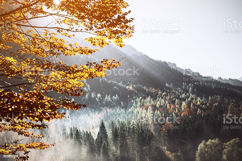 Forest in Alps stock photo