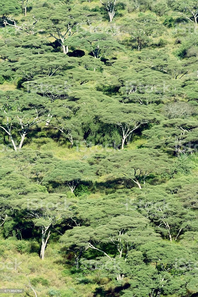 Forest in Arba Minch, Ethiopia stock photo
