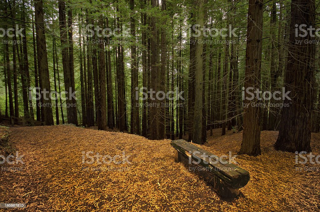 Forest in autumn. royalty-free stock photo