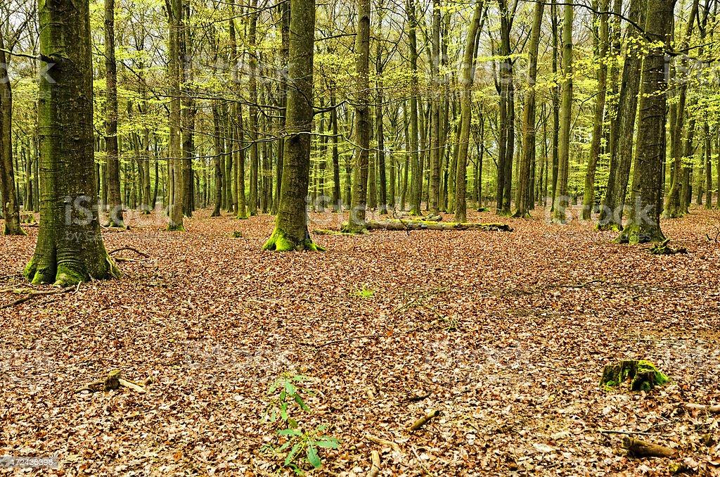 Forest in autumn segment stock photo