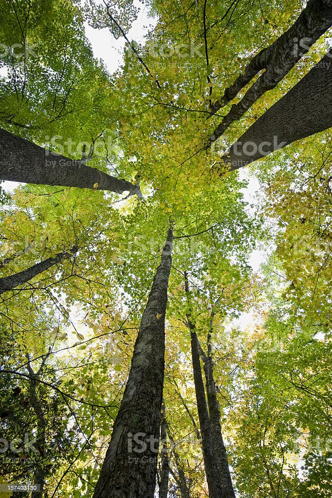 Forest in Autumn Series (XXL) stock photo