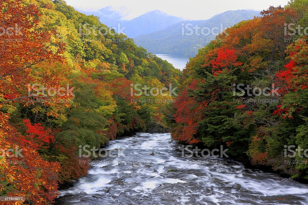 Forest in autumn-Japan stock photo