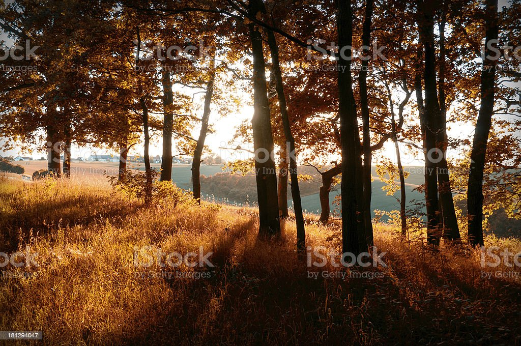forest in backlit stock photo