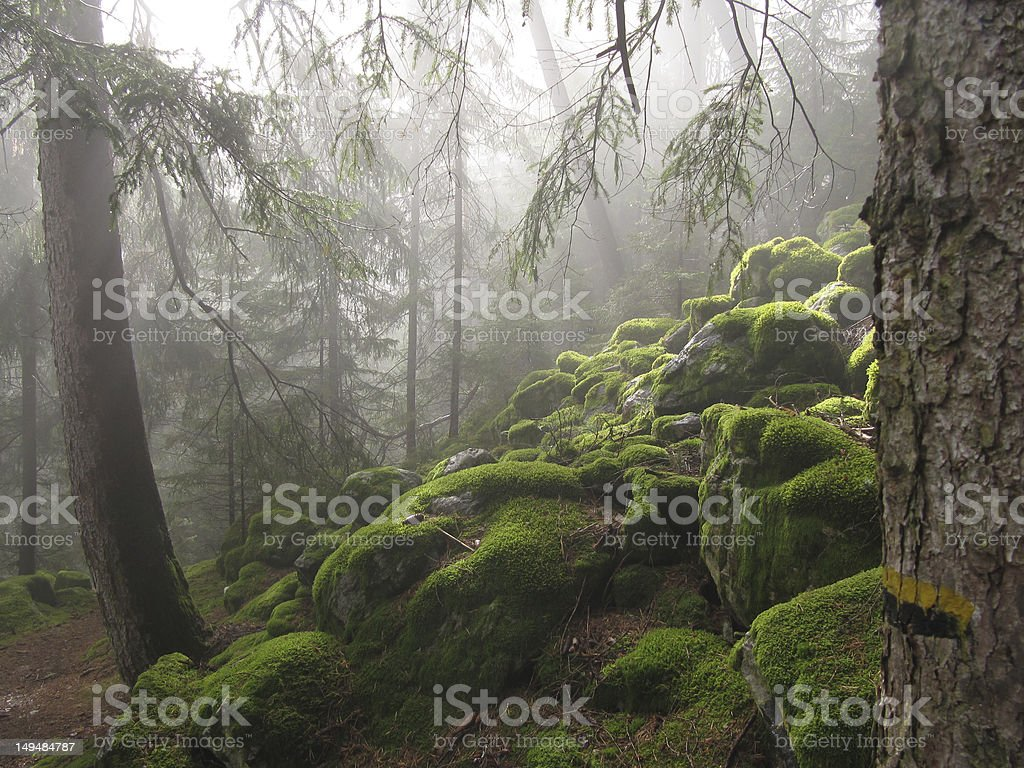 Forest in daylight stock photo