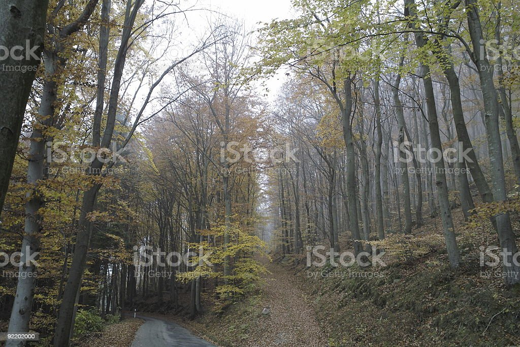 forest in fall with fog and small street stock photo