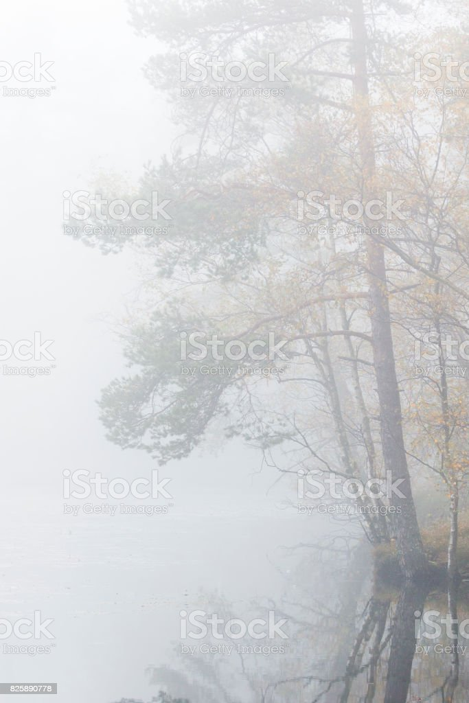 Forest in fog by a lake stock photo