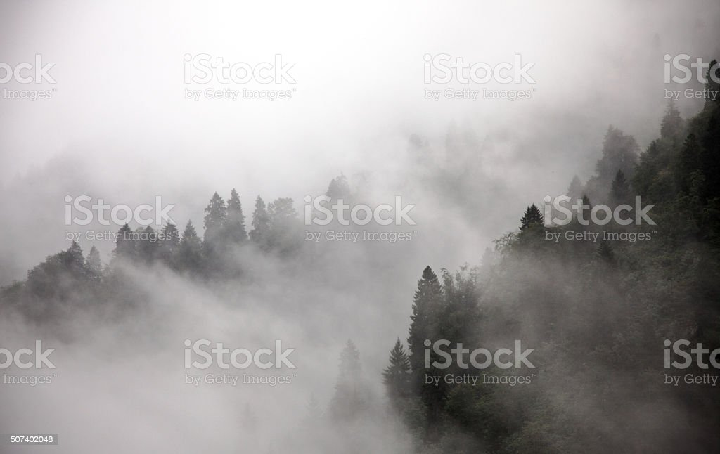 Forest in Fog royalty-free stock photo