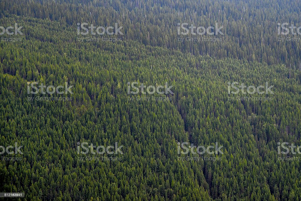 Forest in Glacier National Park stock photo