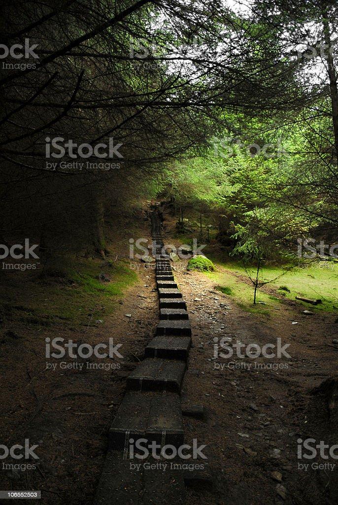 forest in Glendalough stock photo