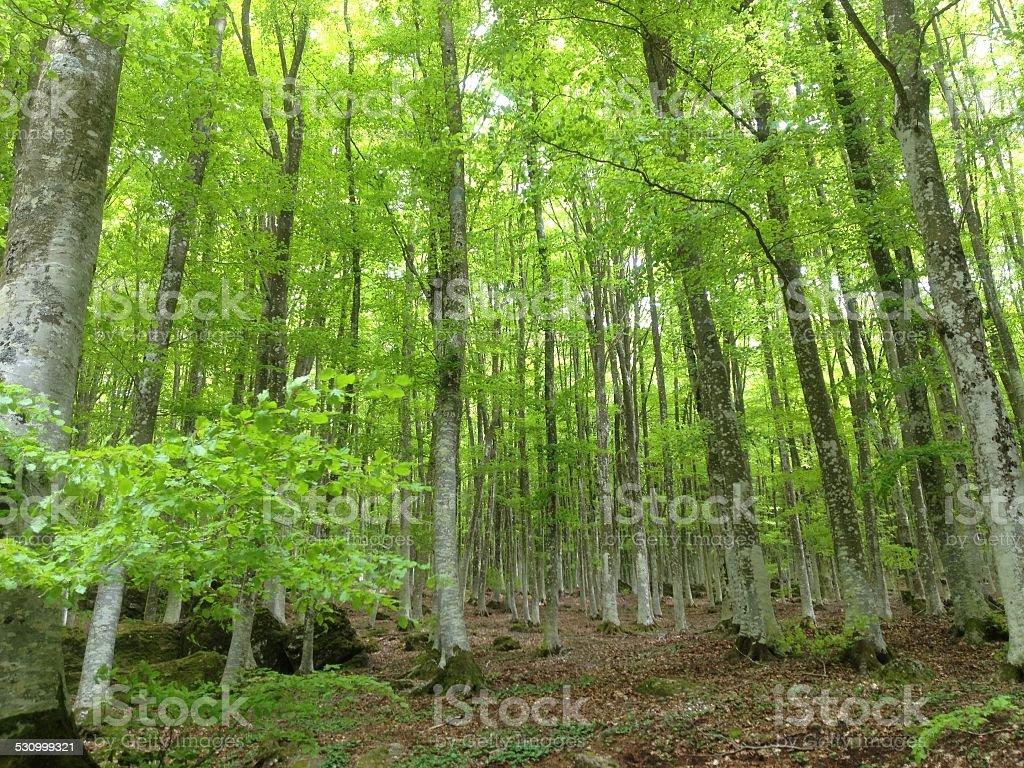 Floresta em Monte Amiata foto royalty-free