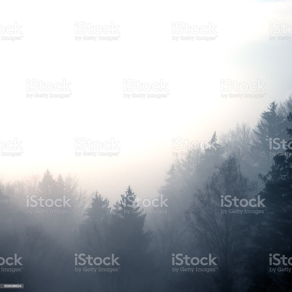 forest in morning fog stock photo