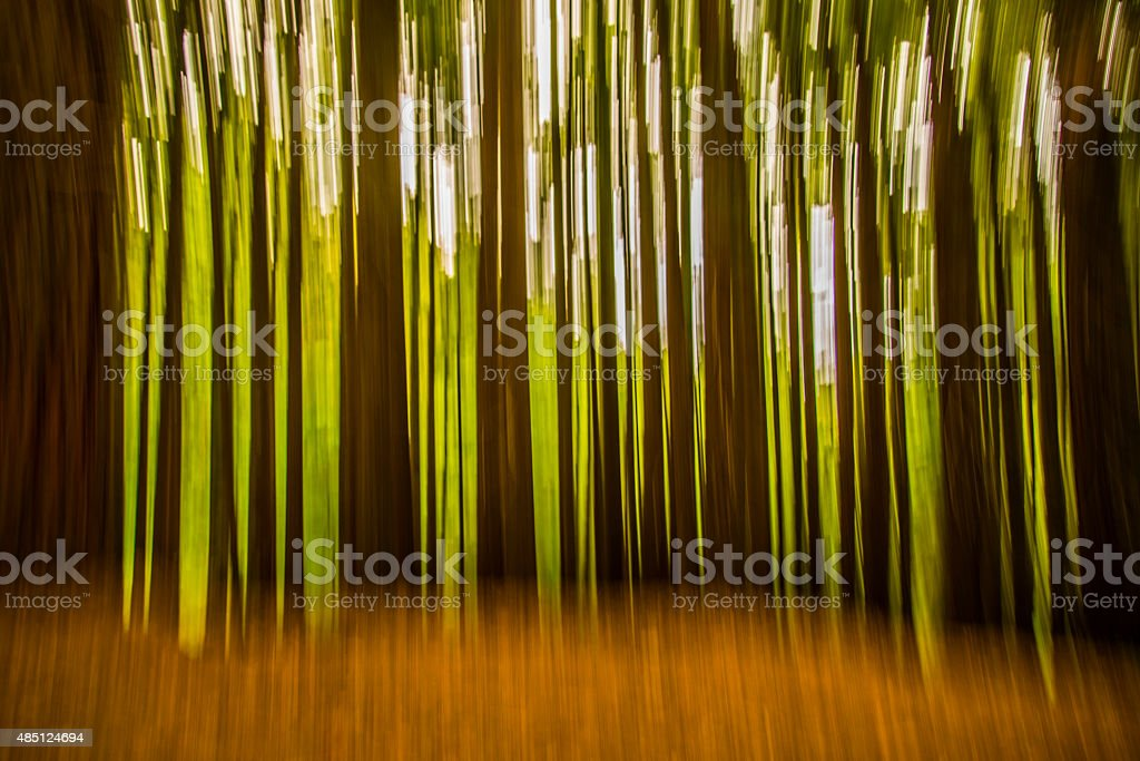 Forest in motion stock photo