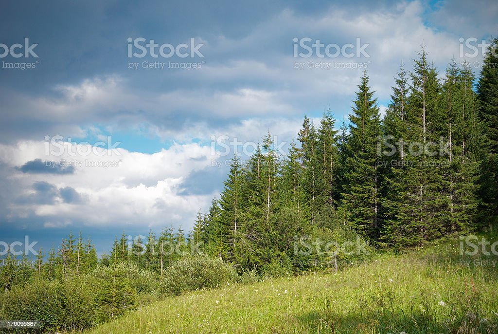 forest in mountains royalty-free stock photo