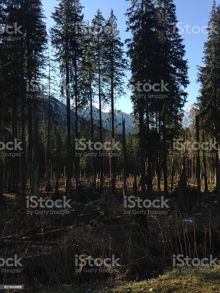 Forest in mountains stock photo