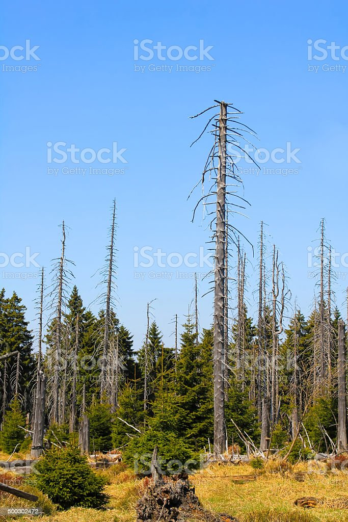 Forest in national park Harz stock photo