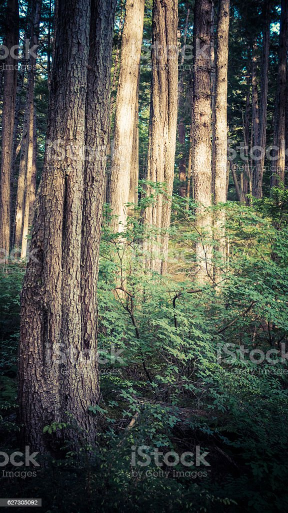 Forest in Southeast Alaska stock photo