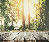 Forest in summer, with beautiful sunlight and wood planks floor