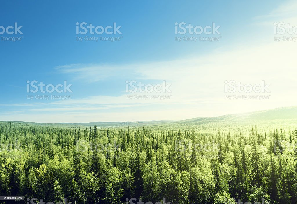 forest in sunset time stock photo